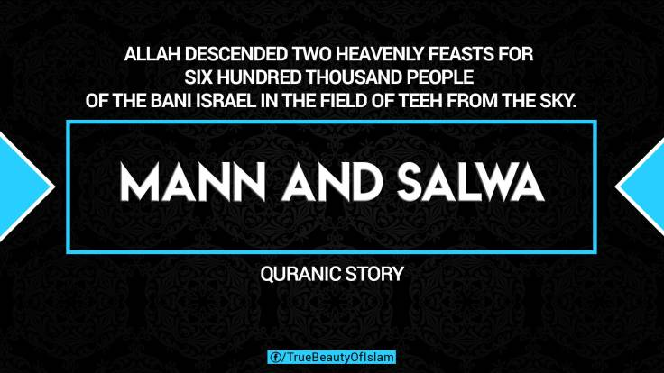 5. MANN-AND-SALWA